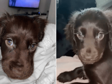 This puppy with gorgeous, salon-worthy eyelashes will melt your heart
