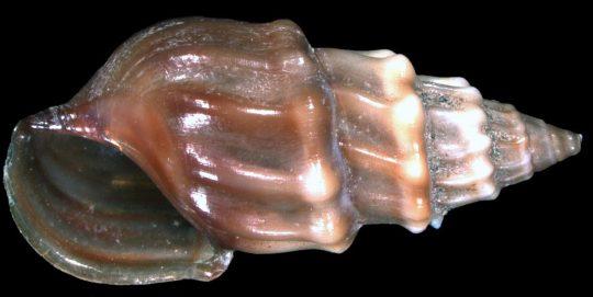 snail biodiversity