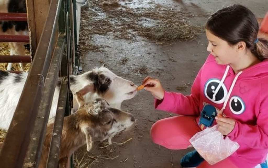Rosaleigh feeding the goats at The Petting Farm at Domino Farms