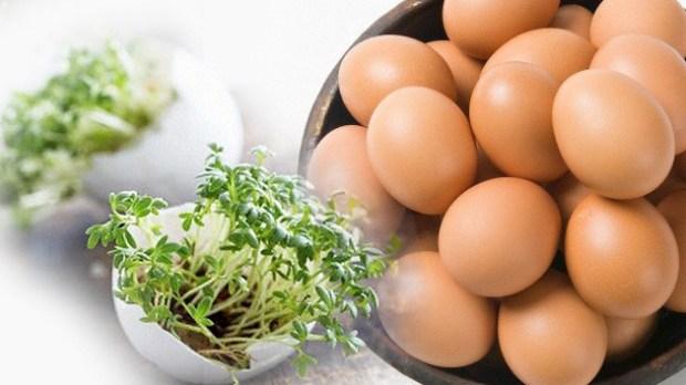 huevo de origen vegetal