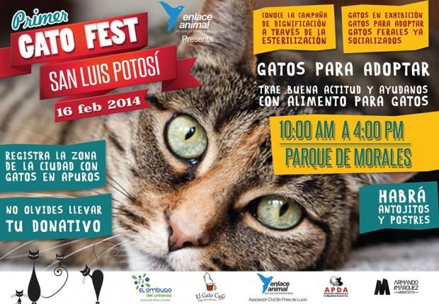 Primer Gato Fest