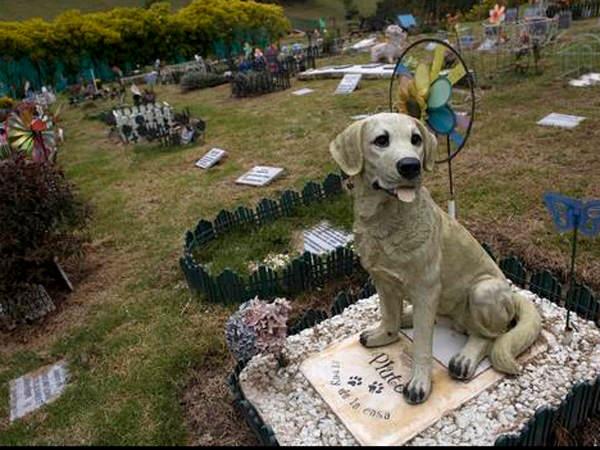 cementerio mascotas
