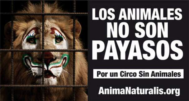 Los leones no son payasos