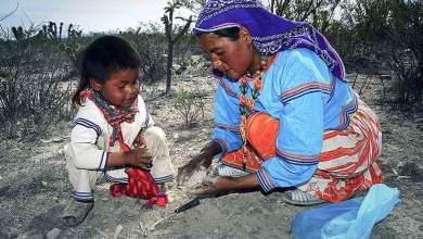 Photo of «Huicholes, los ultimos guardianes del Peyote» dentro del Rodando Film Festival