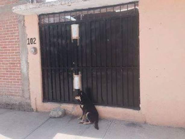 perro familia ejecutada
