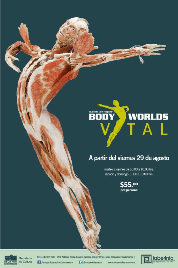 Body Worlds Vital en San Luis Potosí @ Museo Laberinto  | San Luis Potosí | San Luis Potosí | México