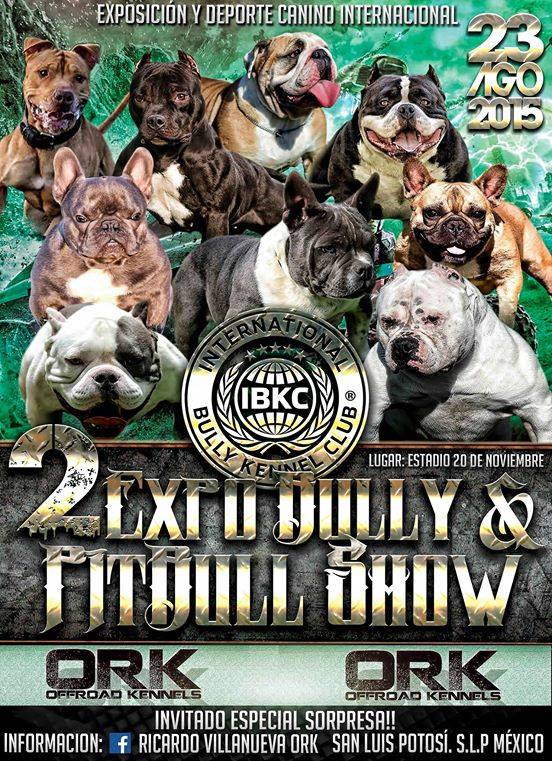 2 Expo Bully  and pitbull show slp