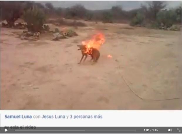 coyote peñasco quemado