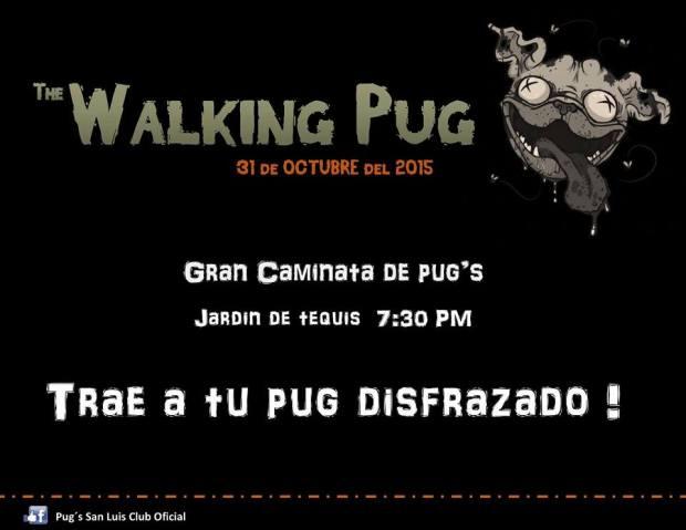 The Walking Pug 2015 @ Jardín de Tequis  | Tequisquiapan | Querétaro | México