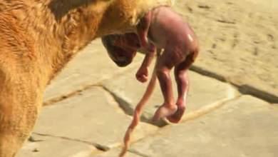 Photo of Perro salva a recién nacido abandonado
