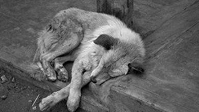 Photo of Se registran muertes de perros en San Luis Potosí por el frío