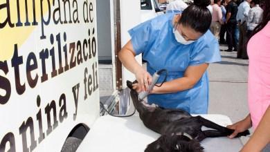 Photo of Ayuntamiento realiza campaña de esterilización para mascotas