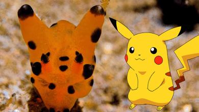 Photo of Esta criatura marina parece un «Pikachu»