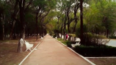 Photo of Planean sembrar árboles frutales y liberar aves en el Parque Morales