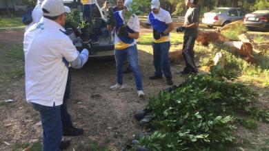 Photo of Ciudadanía plantanuevos árboles en el Parque Morales