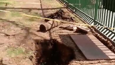 Photo of Video: Interapas busca talar árboles del Parque Morales