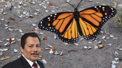 Photo of Gallardo intentó apoderarse de tierras de descanso de la Mariposa Monarca