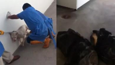 Photo of Video: Denuncian crueldad animal por parte del Antirrábico de SLP