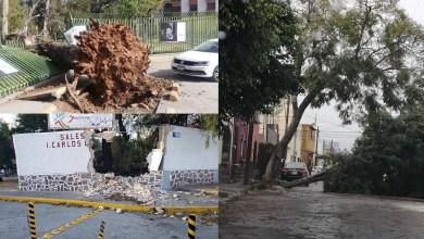 Photo of Fuertes vientos derriban árboles y espectaculares en capital potosina
