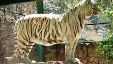 Photo of Zoológico de Mexquitic pide ayuda; animales se están quedando sin comida