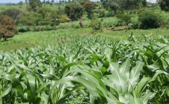 Nearly 200,000 Ugandans are small-scale organic farmers, the highest number of organic farmers after India.