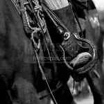 The Cowboy Horse Tackle Black And White Photography