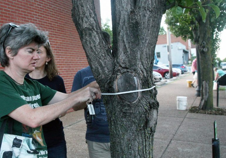 Group spreads TLC for budding trees