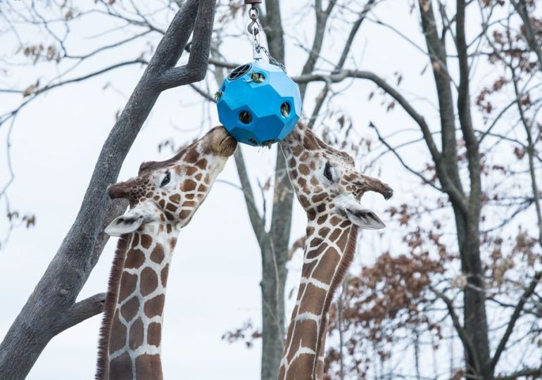 Animals always, visitors again! Zoo to reopen June 13