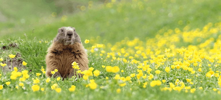 Lesson of 'Groundhog Day,' virus: Learn mindfulness