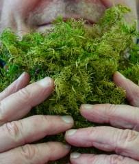Lea Kömi, Maailmankylä metsä käsikuvat-41