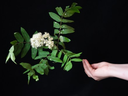 Lea Kömi, Harakka käsikuvat-4