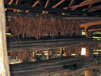 vinales cuba tobak