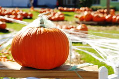 Favorite Fall Activities for Families in Tampa Florida