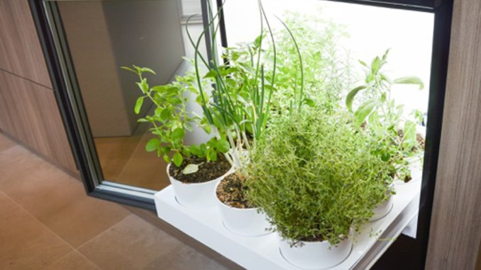 Alternativas para ter uma horta dentro de casa