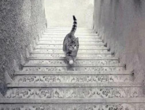 gato subindo ou descendo