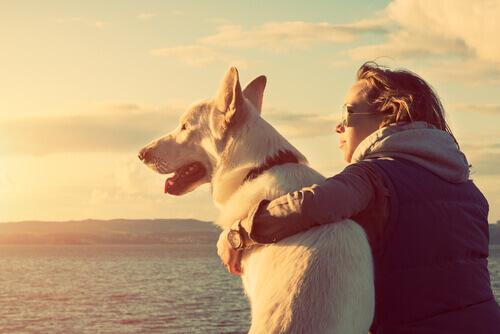amor-mulher-cão