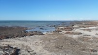 Día 3. Estromatolitos en Shark Bay. Google it!