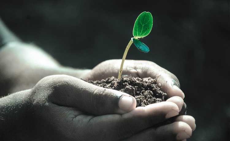 Plantar árboles en Canadá