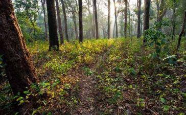 bosque-canada