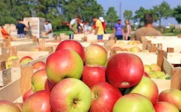 trabajar-manzana-francia