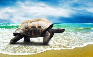 Trabajar con tortugas marinas