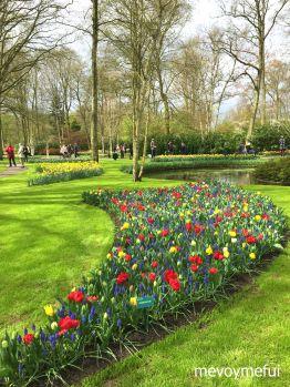 Keukenhof Gardens Tulips Amsterdam