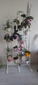 veel planten in een Ikea-rek. op deze foto bloeit er helaas niets