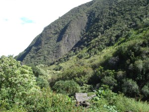 Iao Valley (5)
