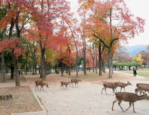 what to do in Nara