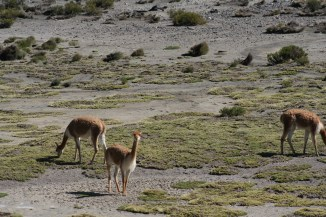 Altiplano - 93
