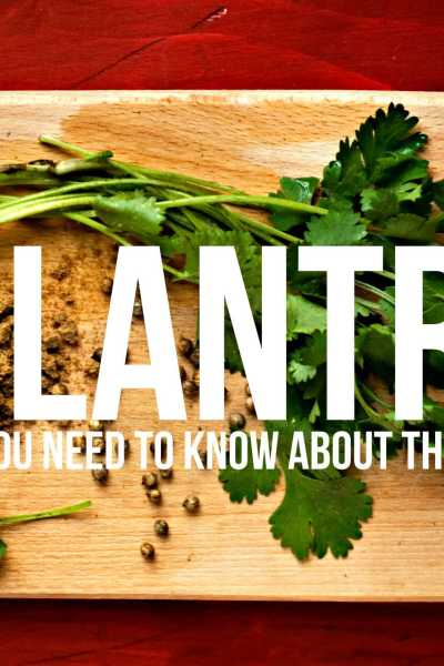 Cilantro: What You Need to Know