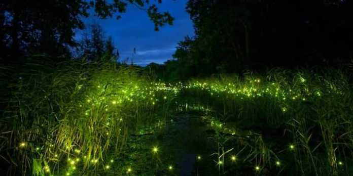 Image result for Mexico's firefly forest