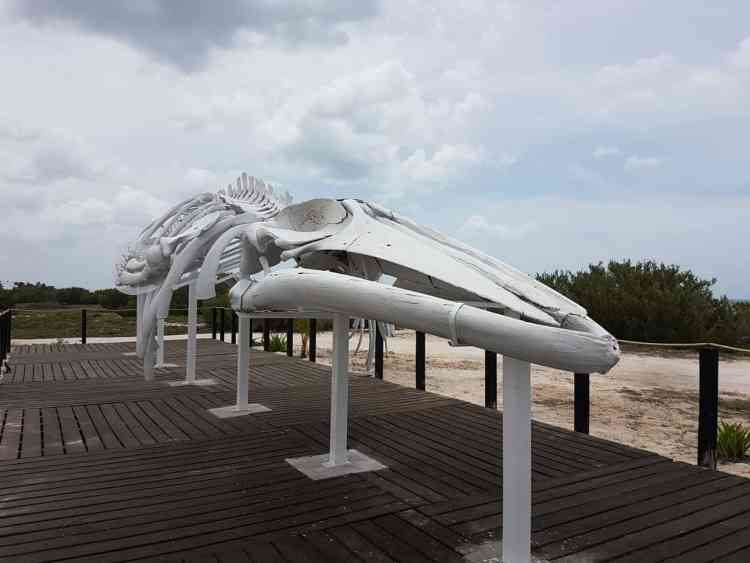 Exploring Around Progreso: History, Nature And Beaches