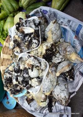 Huitlacoche/corn fungus